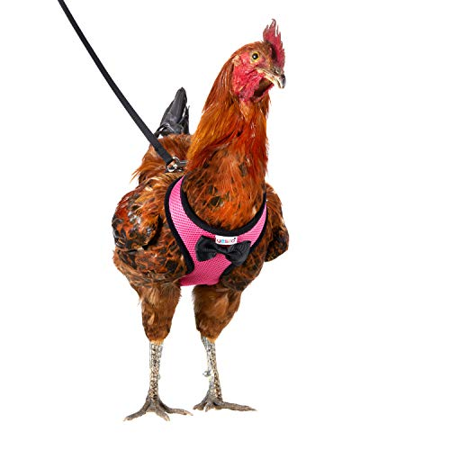 Tamanho de galinha Yesito com coleira combinando de 1,8 m – ajustável, resistente, confortável, respirável, tamanho grande, adequado para frango pesando cerca de 2,4 kg, rosa