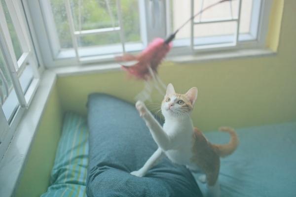 Gato Brincando Com Varinha Flying Cat.