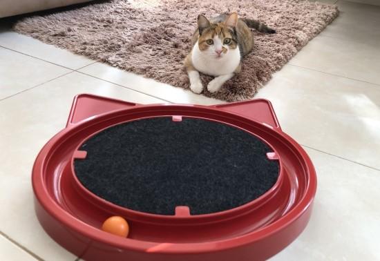 Gato ao lado de um brinquedo Super Cat Relax.