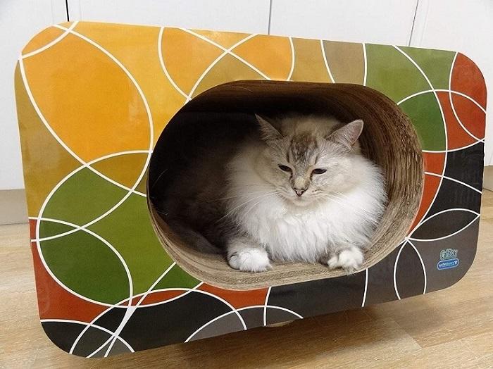 arranhador de papelão, cama e toca, cat box.