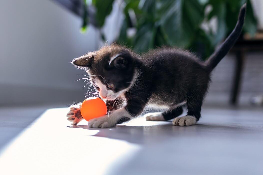 Brinquedos-para-gatos-filhotes