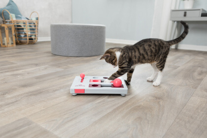 brinquedos-para-gatos-filhotes-tabuleiro-interativo