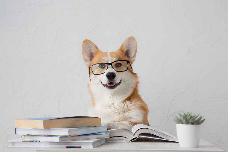 Cachorro Usando óculos Em Cima De Uma Mesa Cheia De Livros