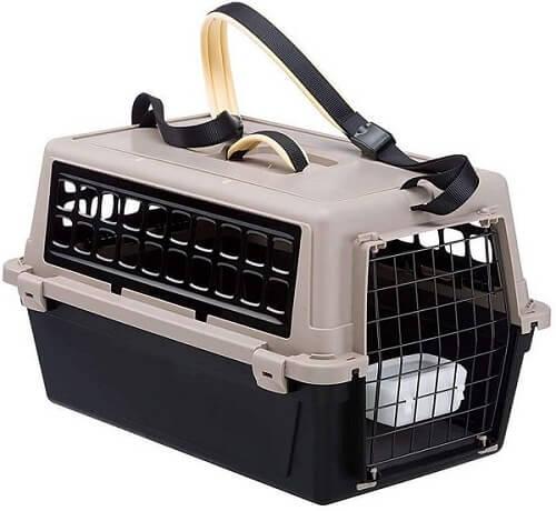 como cuidar de gatos caixa de transporte