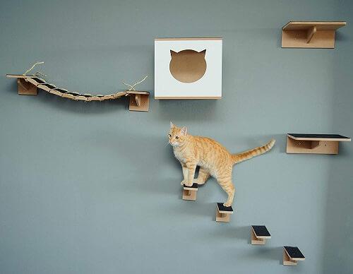 como cuidar de gatos parquinho e móveis de verticalização
