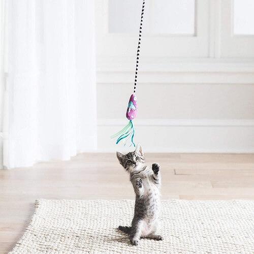 como cuidar de gatos varinha para brincar com gatos