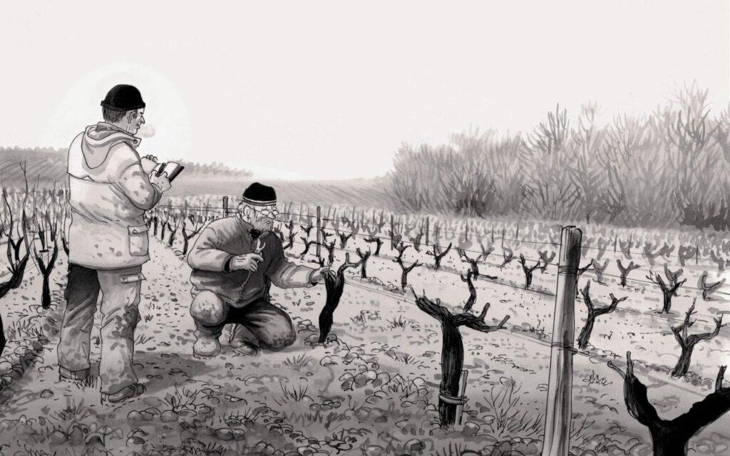 livros sobre vinho os ignorantes