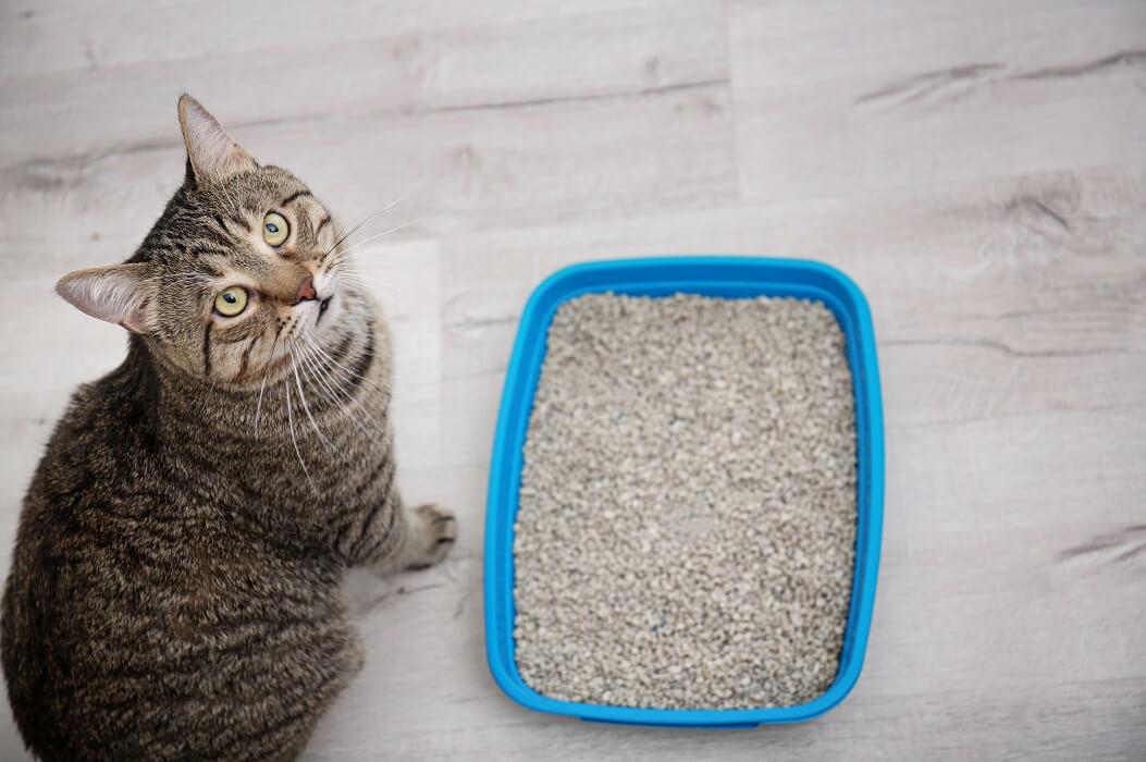 Melhor-areia-para-gatos