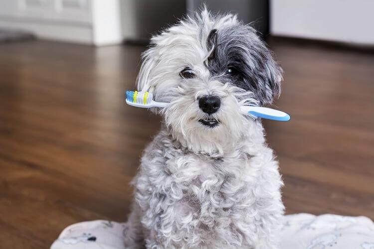 Pastas De Dentes Para Cachorros: Conheça 9 Modelos