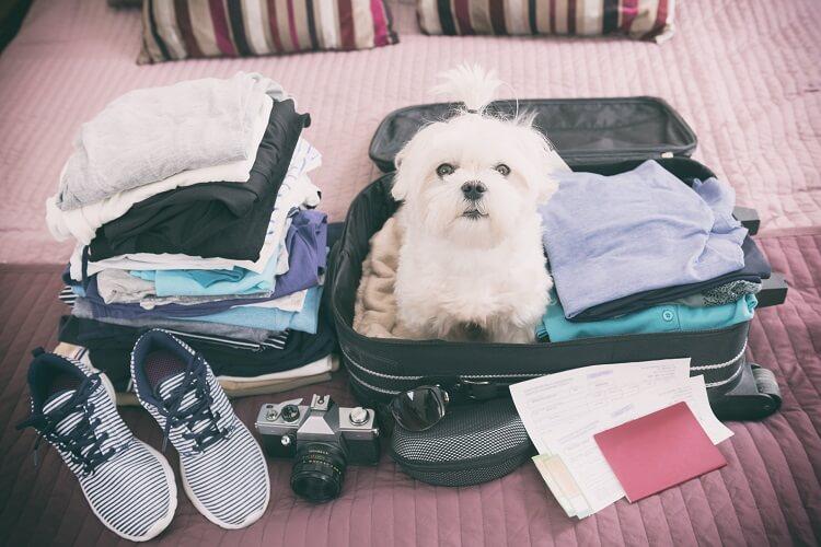 Cachorro dentro de uma mala.
