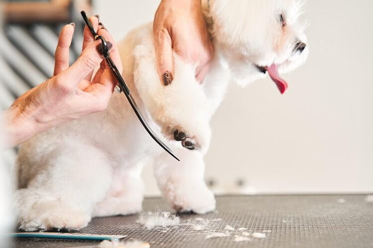 Cachorro cortando os pelos.