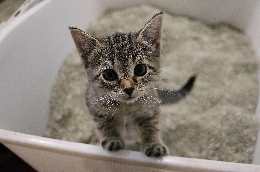 Melhor-caixa-de-areia-para-gatos