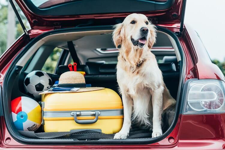 Cachorro No Porta Malas De Um Carro