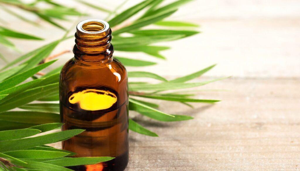 óleo essencial de tea tree
