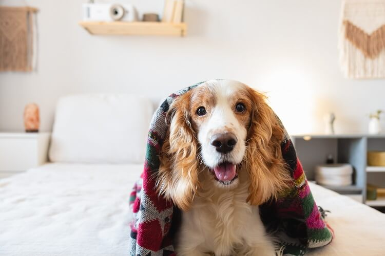 Cachorro peludo com manta colorida.