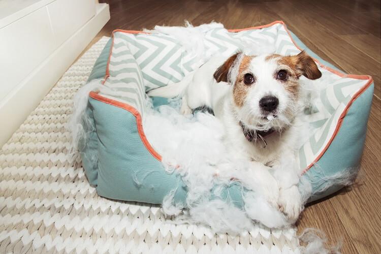 Cachorro deitado em cama destruída.