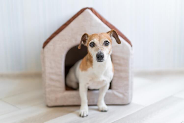 Cachorro em casinhas de algodão.