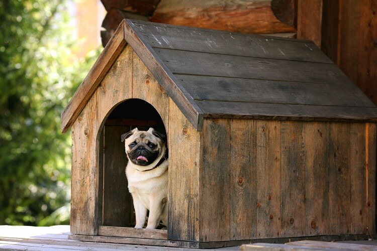 Pug dentro de uma casinha.
