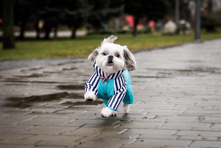 10 Roupas De Inverno Para Cachorros Estilosos!