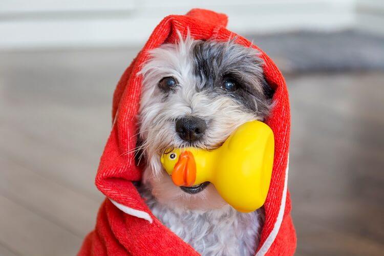 Banho A Seco Para Cachorros