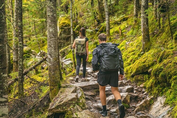 Casal fazendo caminha na floresta