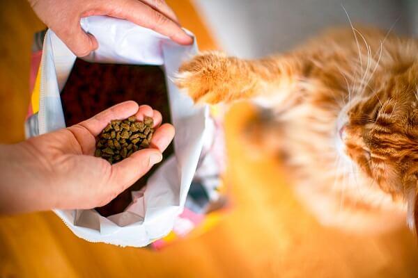 qual a melhor ração para gatos. gatinho amarelo colocando a pata para abrir o pacote de ração.