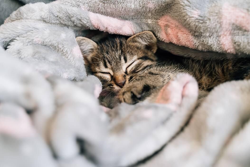 Mantas-e-roupas-de-gatos