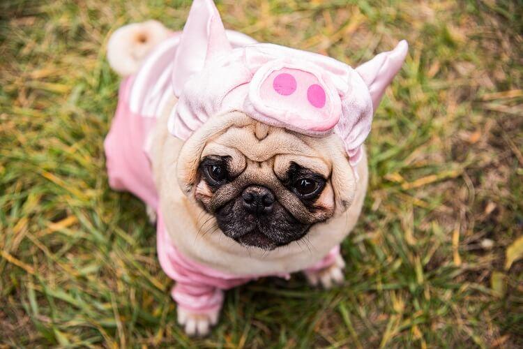 Fantasia Para Cachorros De Halloween