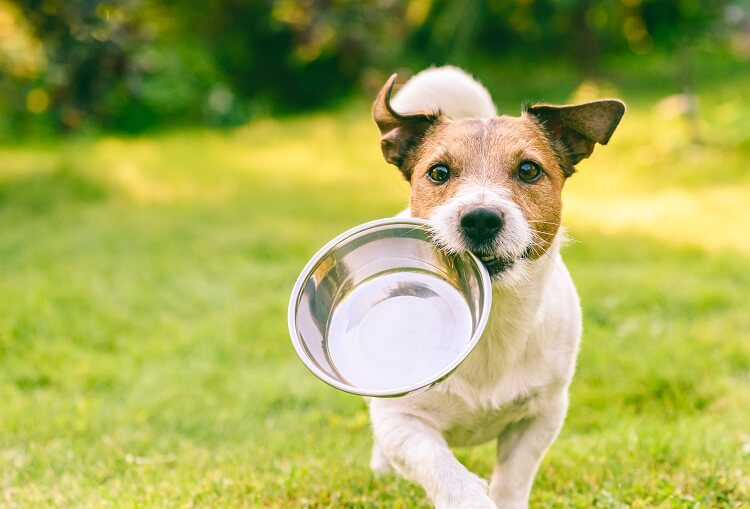 Comedouro Para Cachorros