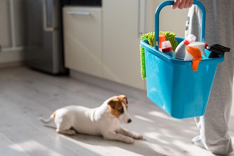 Produtos De Limpeza Para Quem Tem Cachorro