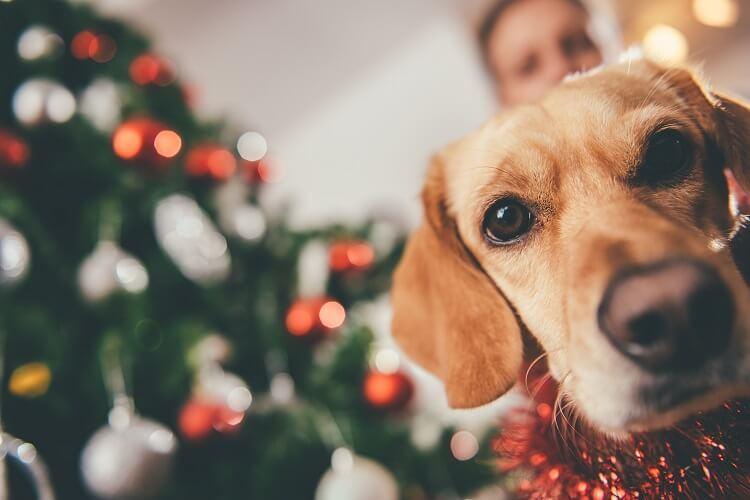 Cachorros No Natal